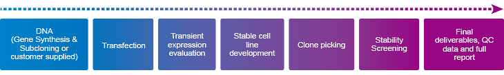 Flow chart of GenScript stable transfection & cell line development services